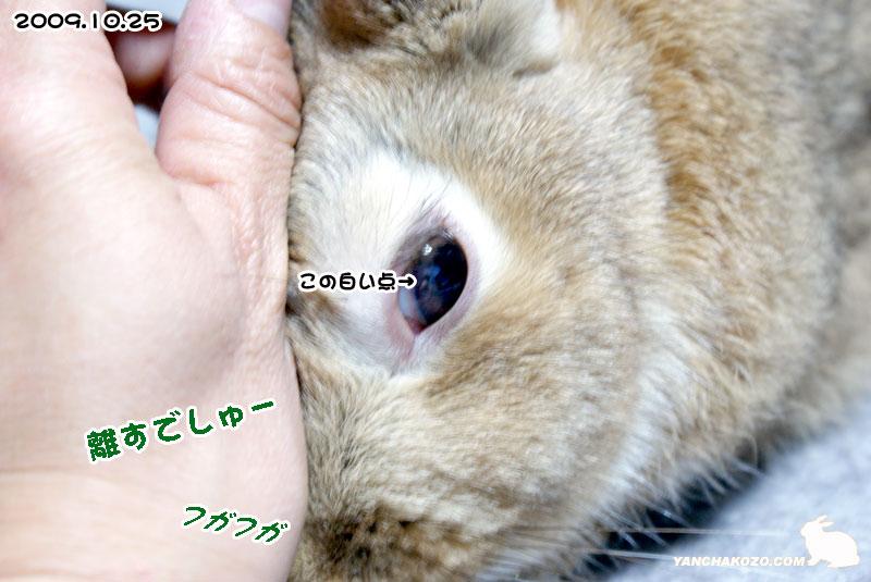 2009.10.25お目目
