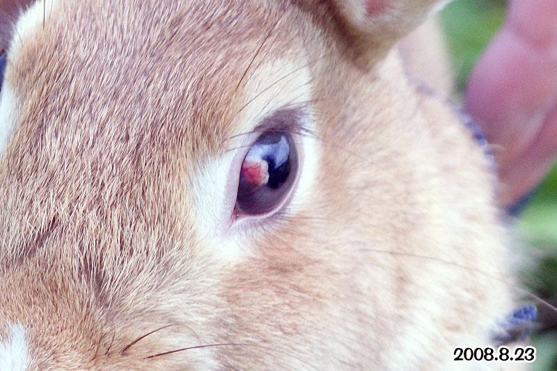 choco8月の目
