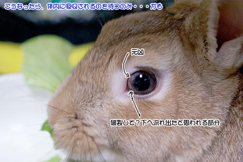 choco2009.2の膿瘍
