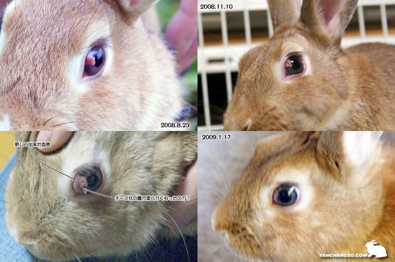 目の膿瘍の変化