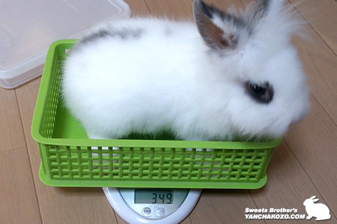 ふらっぷ体重