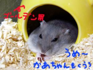 gookuu.jpg