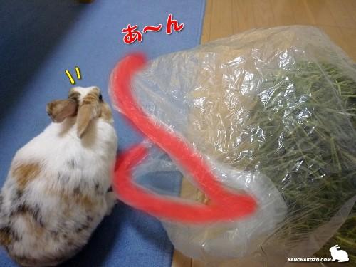 袋があーん