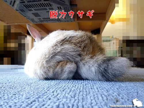 脱力ウサギ