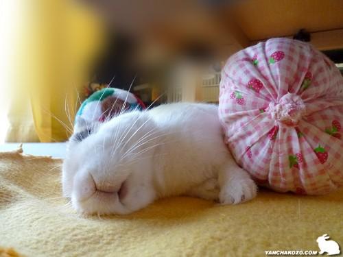 ぷりんの昼寝