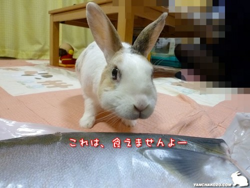 魚は食えません