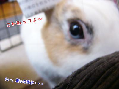 ぷりんアーミー帽02
