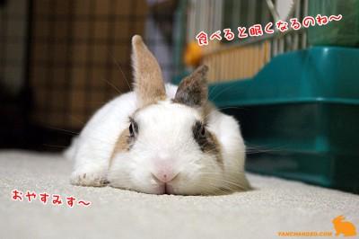 ぷりんお腹いっぱいで寝る