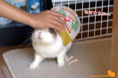 ぷりんに帽子
