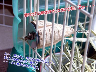 ぷりん木ごま02