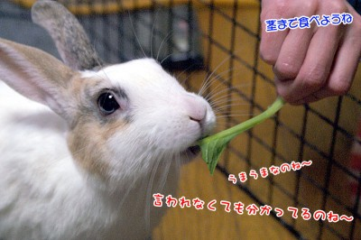 ぷりん茎も食べようね