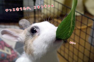 ぷりんこまつちゃん