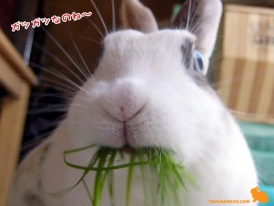 ぷりんガツガツ食べる