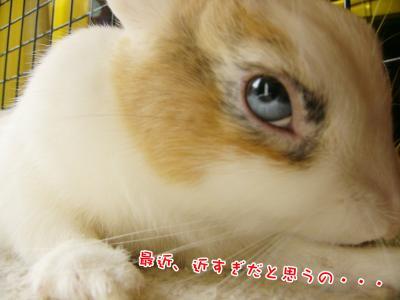 ぷりんの目