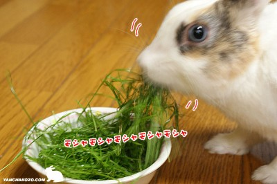 モシャモシャ食べる