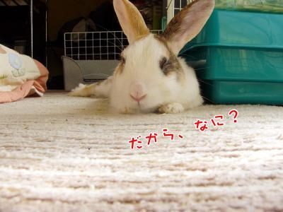 ぷりん何?02