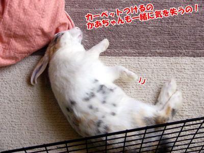 ぷりん寝る