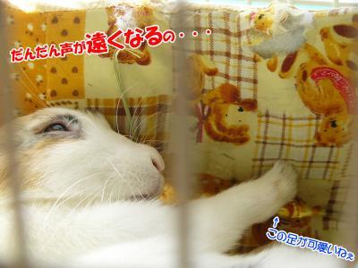 ぷりんお昼寝02