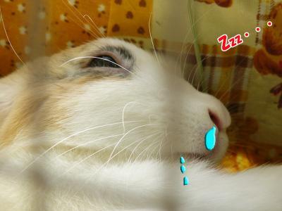 ぷりんお昼寝03