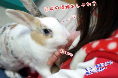 ぷりん美味しい?02