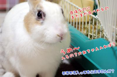 ぷりん食後の牧草?02