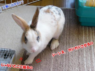 ぷりんタオル02