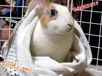 ぷりんとタオル02