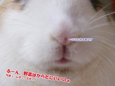 ぷりん野菜02