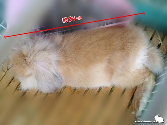トフィの長さ