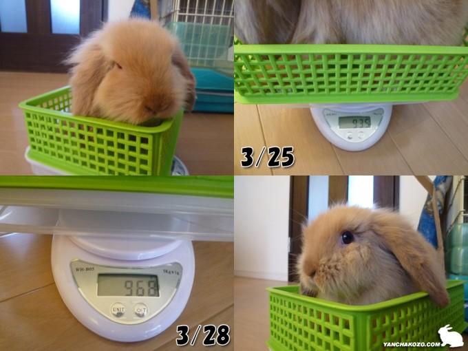トフィ体重測定だ