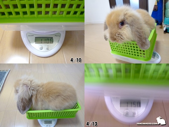 体重測定だよ