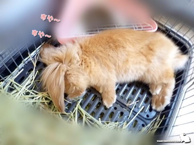 トフィのドタッと寝