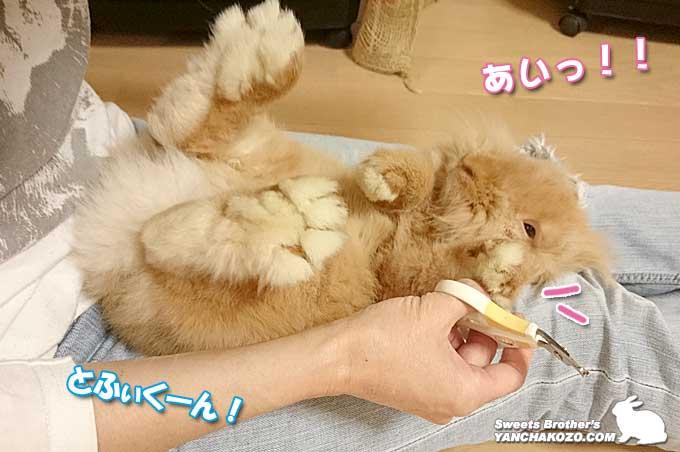 爪切ります