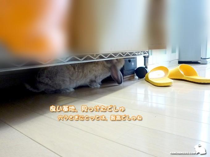 キッチンへGO!