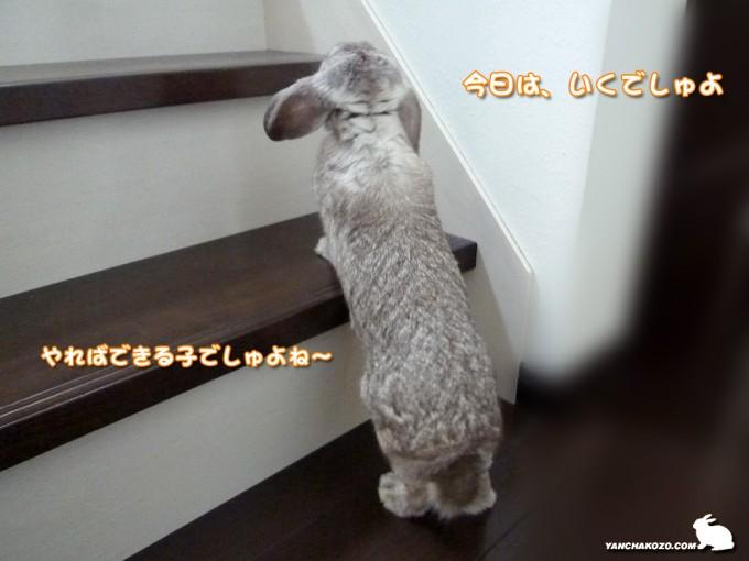 階段に挑む?