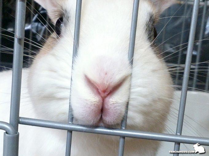 ぷーすけの鼻