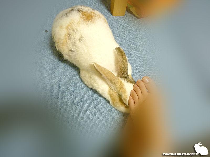 足で撫でる