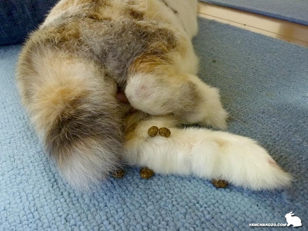 猫がしっぽを振る意味とパターン【尻尾の動き】 | …