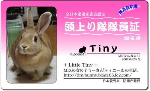 頭上り隊-Tiny